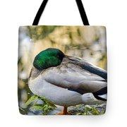 Mallard Napping Tote Bag
