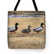 Mallard Trio Tote Bag