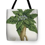 Mandragora Officinarum Tote Bag by LFJ Hoquart