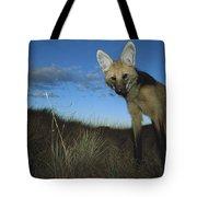 Maned Wolf Hunting At Dusk Brazil Tote Bag
