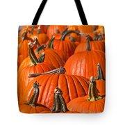 Many Pumpkins In A Row Art Prints Tote Bag