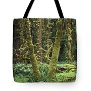 Maple Glade Quinault Rain Forest Tote Bag