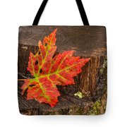 Maple Leaf On Oak Stump Tote Bag