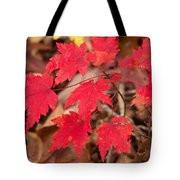 Maple Leaf Palette Tote Bag