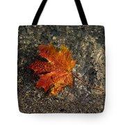 Maple Leaf - Playful Sunlight Patterns Tote Bag