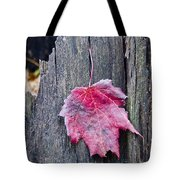 Maple Leaf - Uw Arboretum - Madison Tote Bag