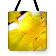 Maple Leaves At Autumn Glory 1 Tote Bag