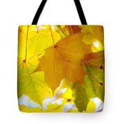 Maple Leaves In Autumn Glory Tote Bag