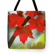 Maple Leaves Show Off Their Autumn Hues Tote Bag