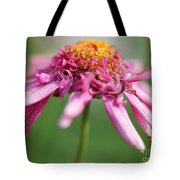 Marguerite Daisy Named Summer Song Rose Tote Bag