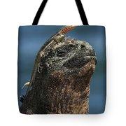 Marine Iguana And Lava Lizard Tote Bag