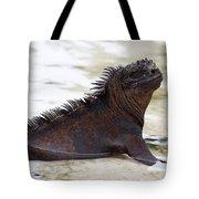 Marine Iguana Galapagos Tote Bag