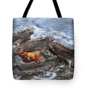 Marine Iguana Trio And Sally Lightfoot Tote Bag