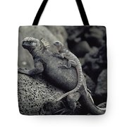 Marine Iguanas Galapagos Islands Tote Bag