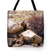 Marmots On Mount Evans Tote Bag