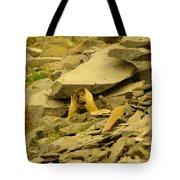 Marmots Playing Tote Bag