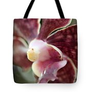 Maroon And White Orchid Tote Bag