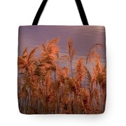 Marsh Reeds Aglow  -  150218a-162 Tote Bag
