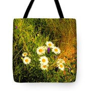 Marshall Point Daisies Tote Bag