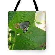 Martial Scrub Hairstreak Butterfly Tote Bag