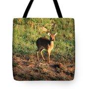Masai Mara Dikdik Deer Tote Bag