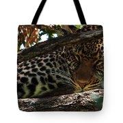Masai Mara Leopard  Tote Bag
