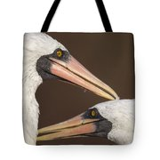 Masked Booby Couple Allopreening Tote Bag