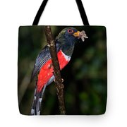 Masked Trogon With Moth Tote Bag