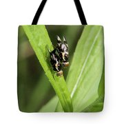 Mating Fruit Flies Tote Bag