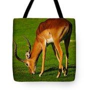 Mature Male Impala On A Lawn Tote Bag