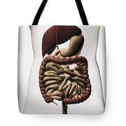 Medical Illustration Showing The Human Tote Bag by Stocktrek Images