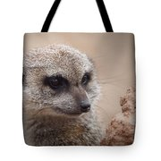 Meerkat 7 Tote Bag by Ernie Echols