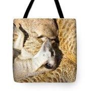 Meerkat Group Resting Tote Bag