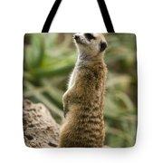 Meerkat Mongoose Portrait Tote Bag