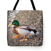 Meet Mr. Quack - A Mallard Duck Tote Bag