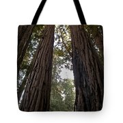 Meeting Of The Sequoias Tote Bag