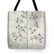 Melia Azedarach From 'phytographie Medicale' By Joseph Roques Tote Bag