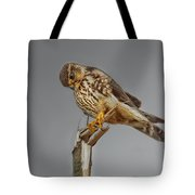 Merlin Falcon Searching For Prey Tote Bag