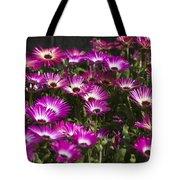 Mesembryanthemums 3 Tote Bag