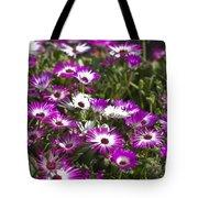 Mesembryanthemums 5 Tote Bag
