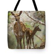 Mesopotamian Fallow Deer 4 Tote Bag
