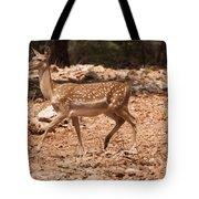 Mesopotamian Fallow Deer  Tote Bag
