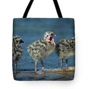 Mew Gull Three Chicks Tote Bag by Tom Vezo