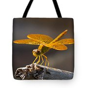 Mexican Amberwing Tote Bag