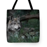 Mexican Grey Wolf Tote Bag