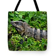 Mexican Spinytailed Iguana  Tote Bag