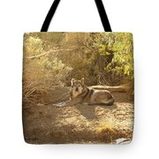 Mexican Wolf  Tote Bag