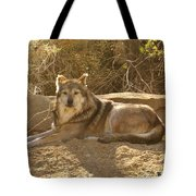 Mexican Wolf Close Up Tote Bag