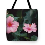 Mexico Pink Beauties By Tom Ray Tote Bag