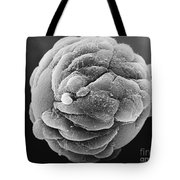 Microcarrier Bead, Sem Tote Bag